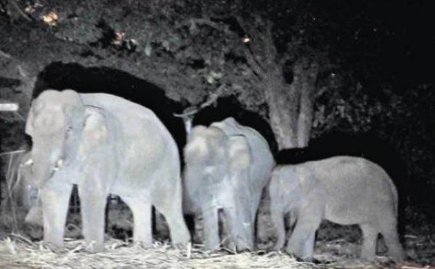 More than 200 elephants had been killed in the country since 1987 by trains passing through forests. (Representative Image)