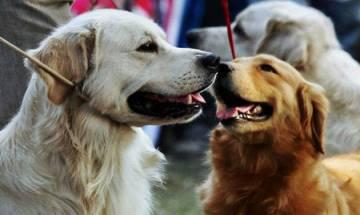 'Pet translator,' to convert dog barks to human language in 10 years?