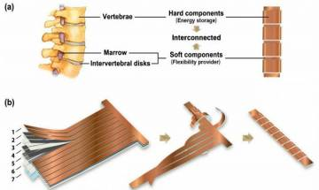 Now get flexible lithium ion battery like human spine