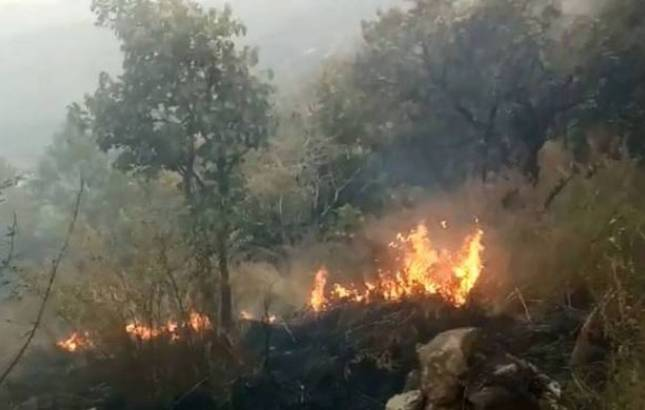 Nine trekkers died in Kurangani Forest fire in Tamil Nadu, 27 rescued