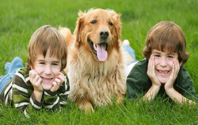 Spending time with dogs may help students release stress during exams (File Photo)