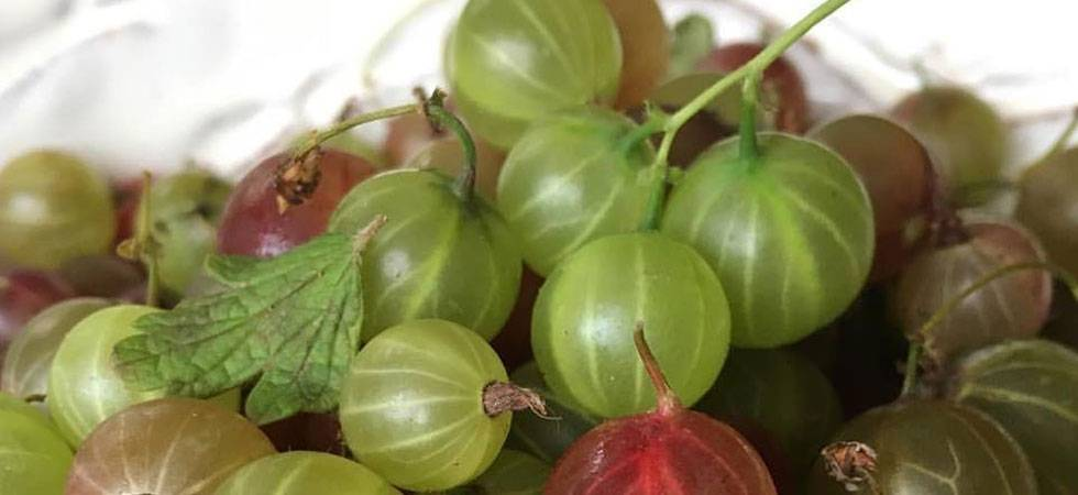Amla benefits: Why this ayurvedic superfood is a boon for health, beauty