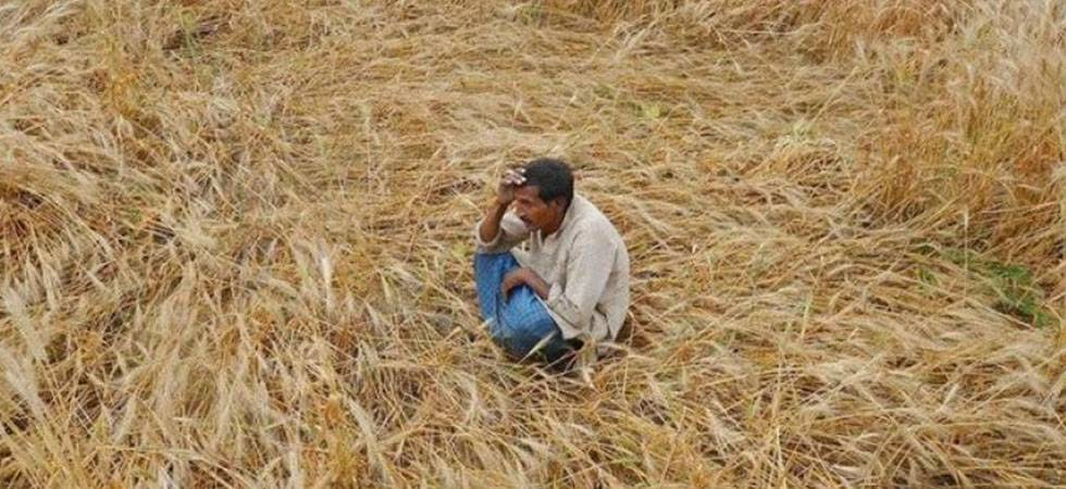 India at risk of food shortage due to climate change, says study (Representative Image)