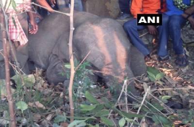 Four elephants hit by goods train in Odisha, die in spot