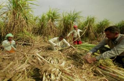 Government to pay Rs 1,540 crore to cane growers on mills' behalf to help clear part arrears