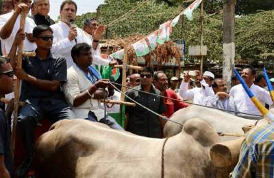 Rahul Gandhi on bullock cart holds protest against rising fuel prices in Karnataka
