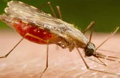 Rapid, portable malaria diagnostic tool developed