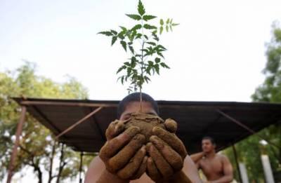 Indian farmer in UAE sets world record of distributing saplings