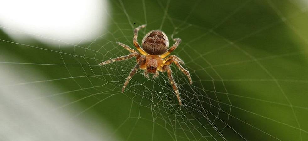 Six new spider species named after Enid Blyton characters (File Photo)