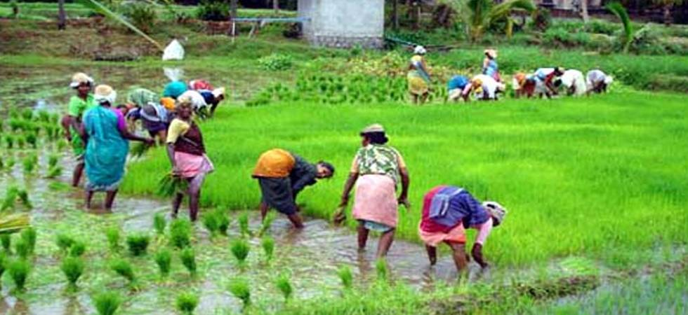 To woo farmers ahead to elections, Centre increases MSP of paddy by Rs. 200 per quintal