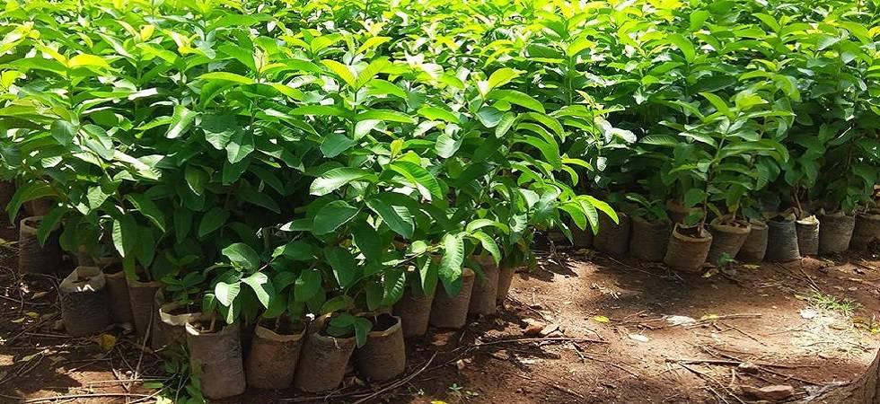 Van Mahotsav 2018 Week: Delhi Zoo to plant 50,000 saplings (Representative image: Facebook)
