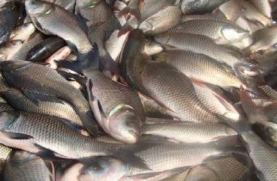 Will ban fish import if impurities are found: Goa Minister