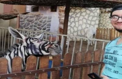Zebra or donkey? Egypt Zoo accused of painting animals
