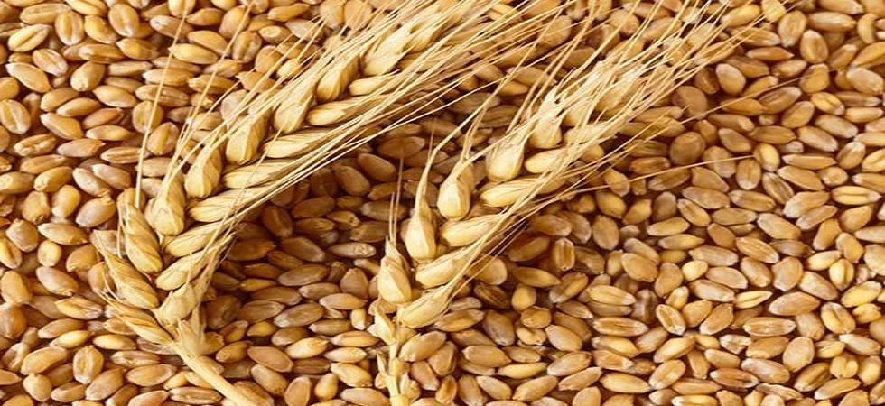 Wheat futures slip 0.55% on firm supply