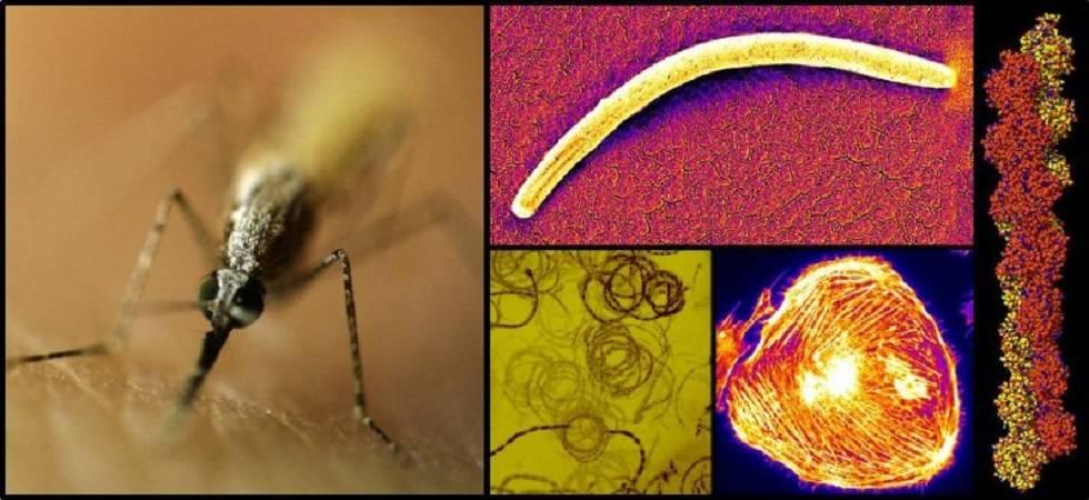 Indian-origin scientist offers hope for malaria prevention (Photo- LinkedIn/Dr Prajwal Nandekar)