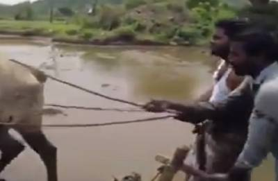 Watch: Telangana farmers take the 'Kiki Challenge' with no car