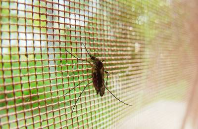 Drug-laced mosquito net may help prevent malaria