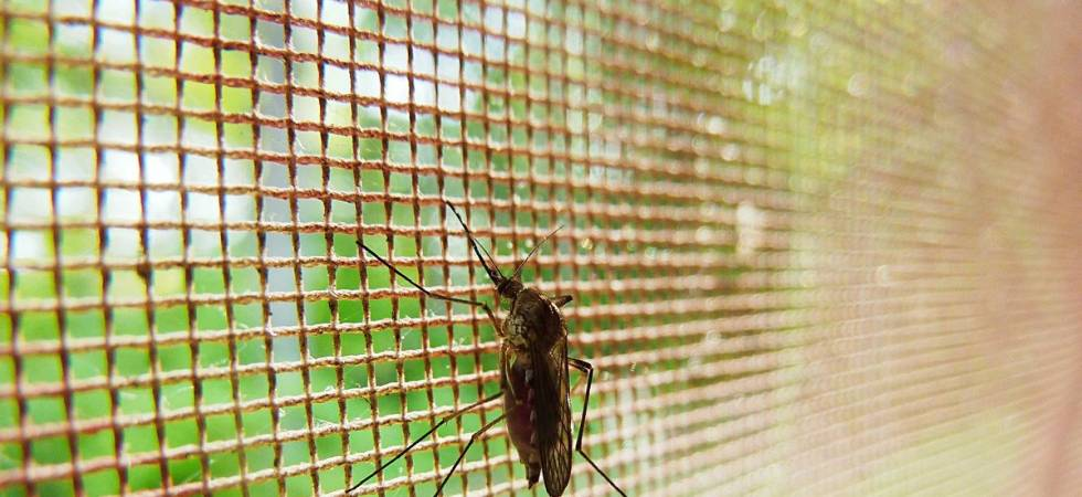 Drug laced mosquito net may help prevent malaria ( Photo: Twitter/ @MicrobesInfect )