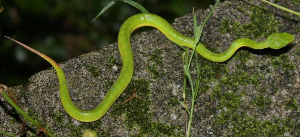 Nag Panchami 2018: Snake parks and species in India