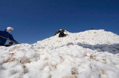 Steps being taken to stop cotton contamination: CCI
