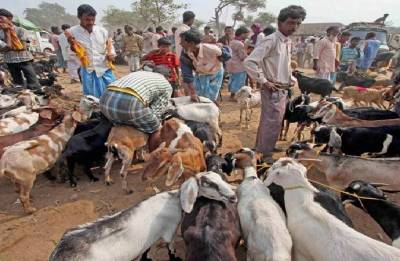 Bakra Eid: Date, significance and history