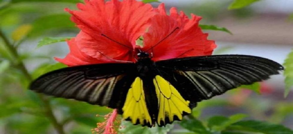 171 butterfly species recorded in Arunachal's Lower Subansiri district (Representational Image)