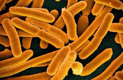 Microbial 'dark matter' dominates Earth's environments