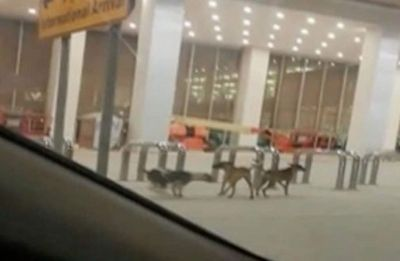Pakistan: Stray dogs found wandering in new Islamabad airport lounge, manager suspended