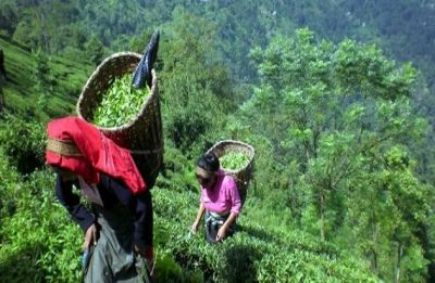 Sikkim shortlisted for FAO's Future Policy Award