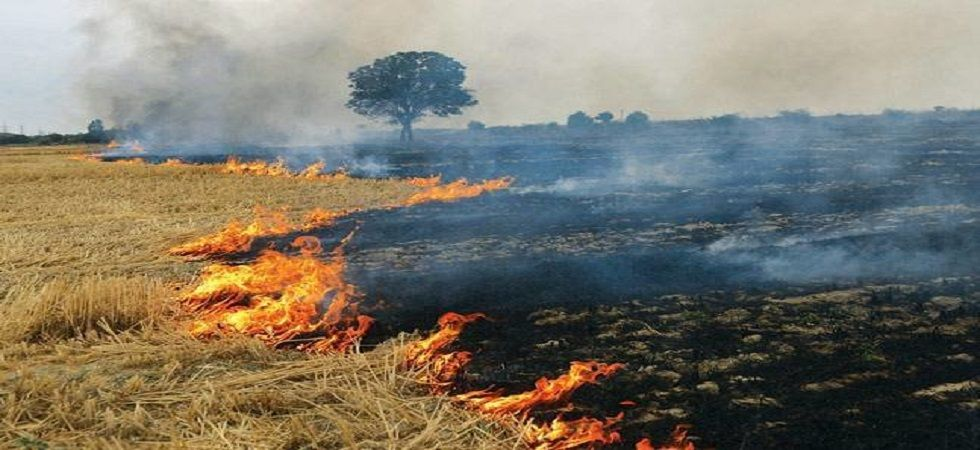 Haryana: 12 farmers fined for burning crop residue in Hisar (Representational Image)