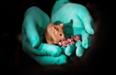 First mammal with two moms born using gene-editing