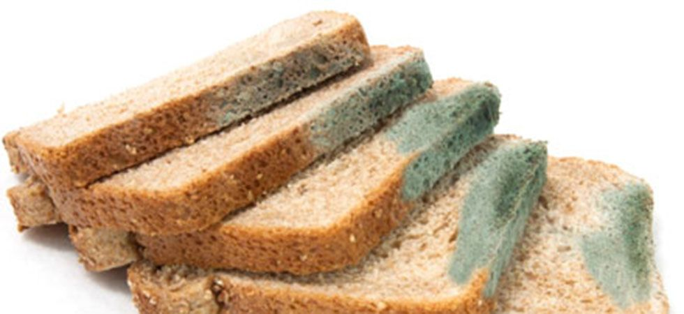 Never eat the clean part of a moldy bread or sandwich! Image: Instagram