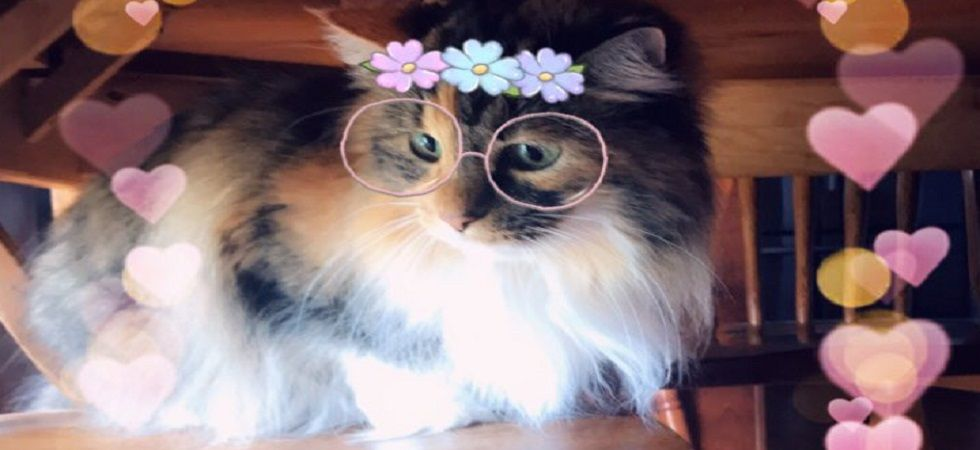 These new Snapchat Cat filters are just aww..dorable! (Photo: Twitter)