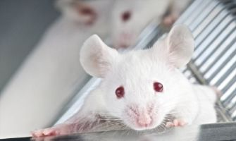 'World's first lab-grown oesophagus implanted in mice'