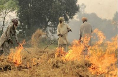 'It takes just a matchstick': Punjab farmers take the cheaper way out to deal with paddy stubble