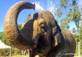 47-year-old beloved Indian elephant Sujata euthanised in California zoo