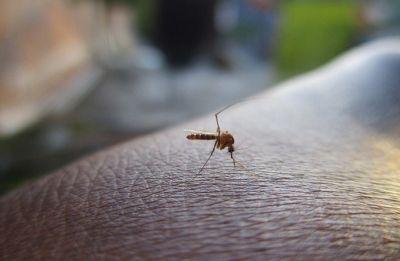 Madhya Pradesh: Three kids die of dengue in Morena, 90 more cases detected
