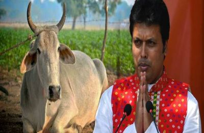 Tripura government to give 10,000 cows to farmers; CM Biplab Deb says he will rear cow at residence