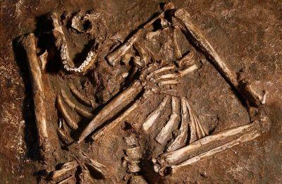 Neanderthals had straighter spine than modern humans: Study