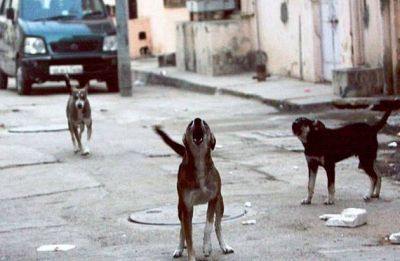 Maharashtra: Five dog die at a care centre in Palghar