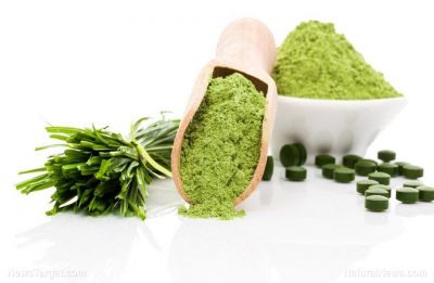 Wheatgrass: Six reasons you should drink beverage made of wheat plant leaves everyday