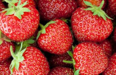 Australia strawberry sabotage: Former farm supervisor charged; held grievance against employer