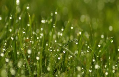 The Quiet Space: In a million bubbling dew drops