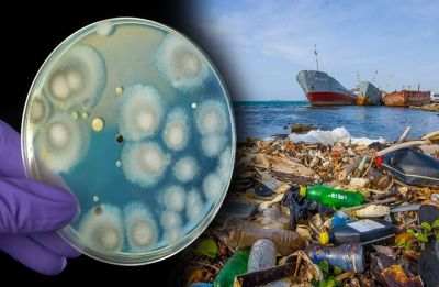 A fungus that can 'Eat' plastic discovered in garbage dump in Pakistan