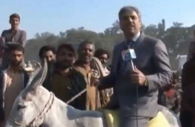 News blooper: Watch Pakistani news reporter fall off donkey while reporting about animal trade on LIVE video