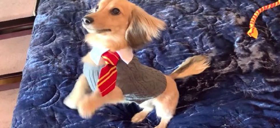 This doggo repsond to Harry Potter spells (Photo: Twitter)
