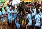 With 1,000 bulls participating, 53 people injured at Jallikattu event in Tamil Nadu's Madurai