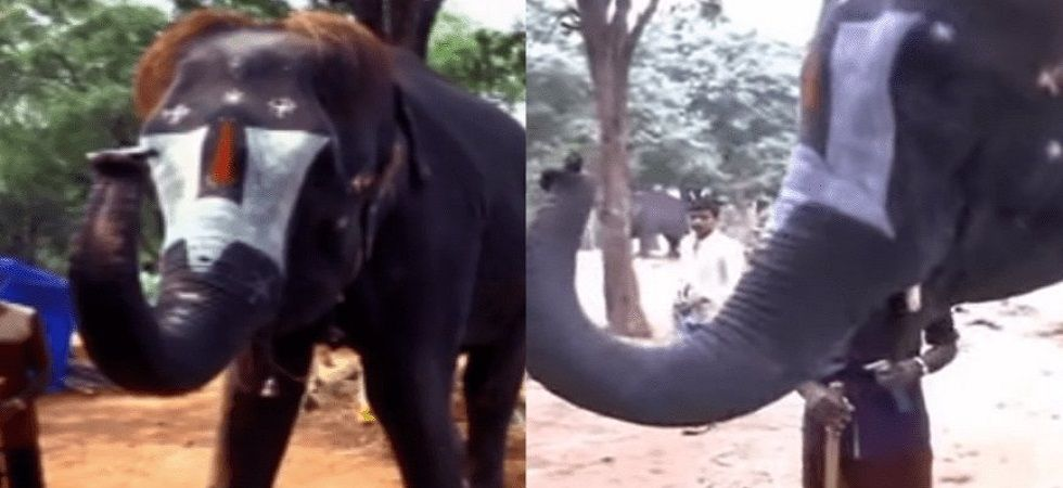 This elephant in Tamil Nadu can play the harmonica with its trunk (Photo: Twitter)