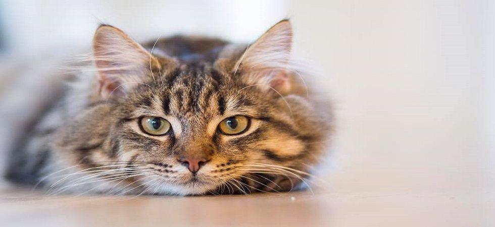 Customer orders Cat dish receives illegal Stun Gun instead! (Photo: Facebook)
