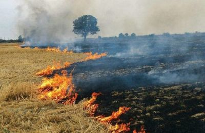India loses $30 billion annually due to air pollution from stubble burning